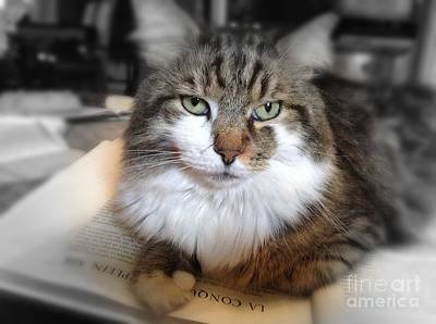 Photograph - Smart Cat by Mary-Lee Sanders