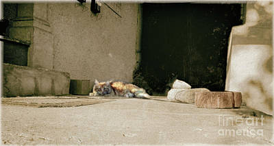 Cat And Boots  Art Print by Steven Digman