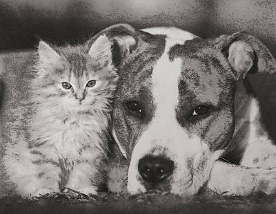 Digital Art - Cat And Doggy Love by Mario Carini