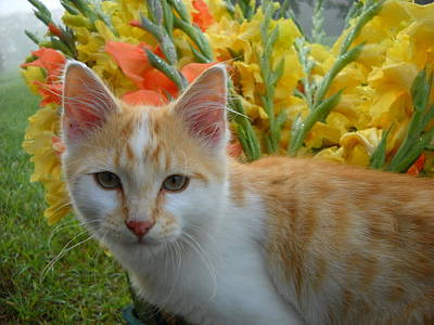Photograph - Cat And Flowers by Kent Lorentzen