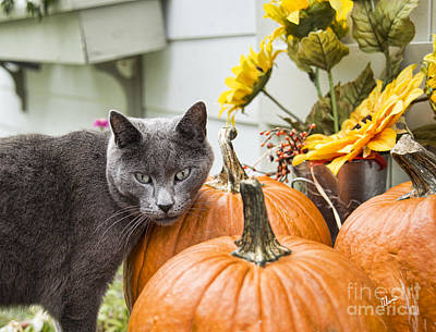 Photograph - Cat And Pumpkins by Alana Ranney