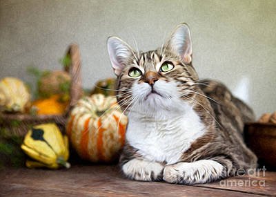 Cat And Pumpkins Art Print by Nailia Schwarz