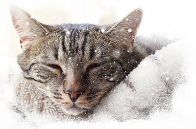 Art Print featuring the photograph Cat And Snow by Helga Novelli