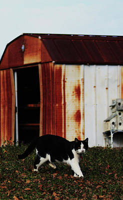 Cat And The Tool Shed Art Print by Kim Henderson