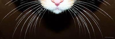 Cat Art - Super Whiskers Print by Sharon Cummings