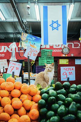 Photograph - Cat At An Israeli Market by Alexandre Rotenberg