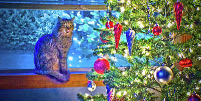 Photograph - Cat At Christmas by Adria Trail