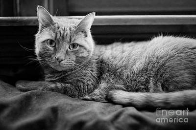 Photograph - Cat At Window Pillow 2 by Patrick M Lynch