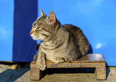 Photograph - Cat Basking In The Sun by Dutourdumonde Photography