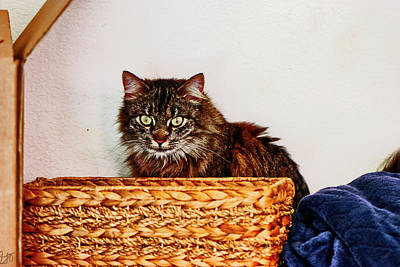 Photograph - Cat Behind A Basket by Gina O'Brien