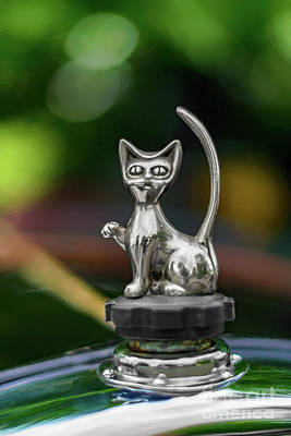 Photograph - Cat Bonnet Mascot by Adrian Evans