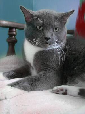 Digital Art - Cat Boticas Portrait  by Miss Pet Sitter