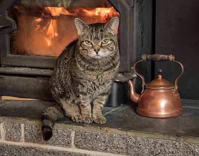 Photograph - Cat By The Fire by Jean Noren