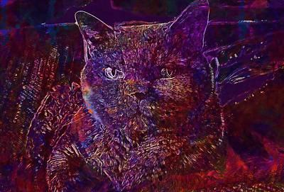 Digital Art - Cat Cat S Eyes Eye Animal Pet  by PixBreak Art