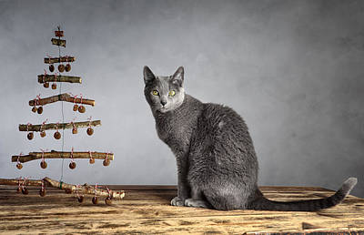 Royalty-Free and Rights-Managed Images - Cat Christmas by Nailia Schwarz