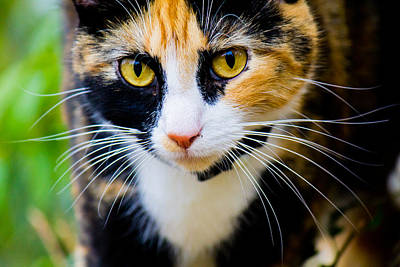 Photograph - Cat Coming Toward You by Jonny D