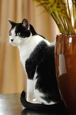 Photograph - Cat Contimplation by Jill Reger