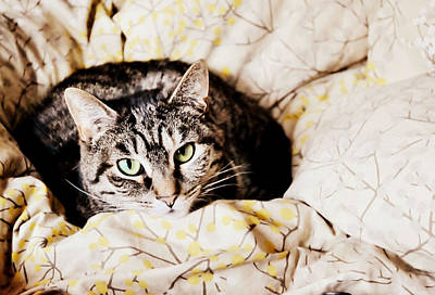 Photograph - Cat Cushioning by JAMART Photography