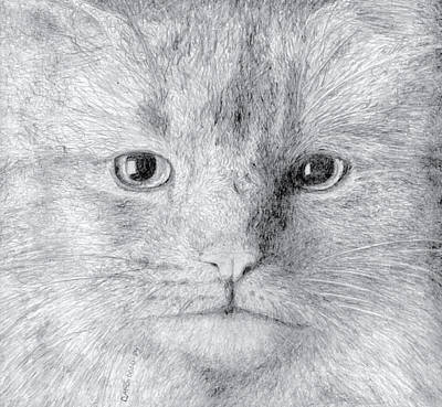 Drawing - Cat by Dan McGibbon