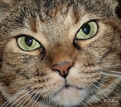 Cat Art Print by Dennis Stein