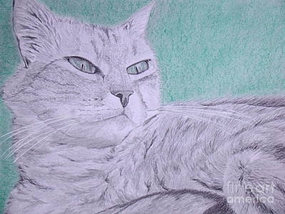 Wall Art - Drawing - Cat Drawing by Cybele Chaves