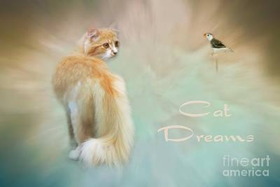 Photograph - Cat Dreams by Renee Trenholm