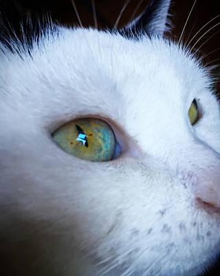 Cat Photograph - Cat Eye by Mikhail Zhirnov