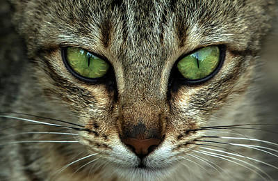 Cat Eye  Art Print by Ramabhadran Thirupattur