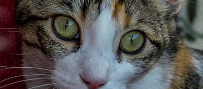 Photograph - Cat Eyes by Bill Posner