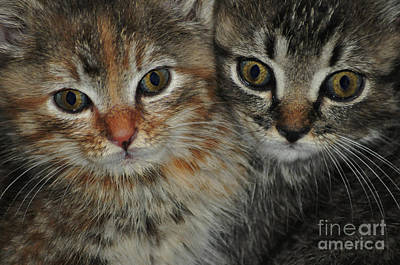 Photograph - Cat Eyes by Eric Liller