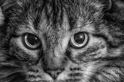 Photograph - Cat Eyes  Intense by Peggy Franz