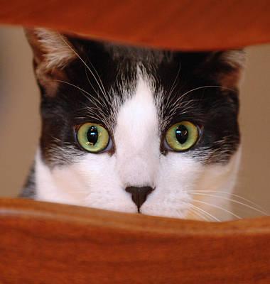 Photograph - Cat Eyes by Jill Reger