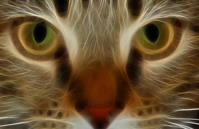 Photograph - Cat Eyes by Kathleen Stephens