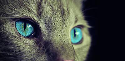 Cute Kitten Photograph - Cat Eyes Look Portrait Wall Art by Wall Art Prints