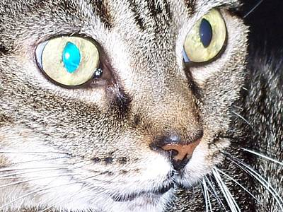 Cat Eyes Art Print by Martha Hoskins