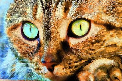 Photograph - Cat Eyes by Steve Stuller