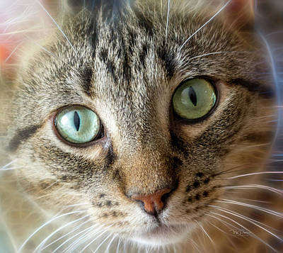 Photograph - Cat Eyes With Glow by Bill Posner