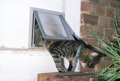 Coming Out Photograph - Cat Flap by Ian Beames