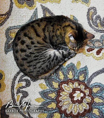 Photograph - Cat Flower by Brian Jones