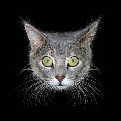 Photograph - Cat Head On Black Background by James Larkin