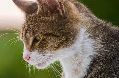 Cat Hunting Art Print