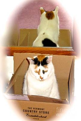 Photograph - Cat In A Box by Phyllis Kaltenbach