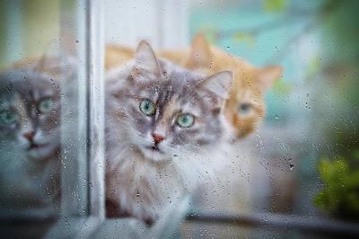 Summer Photograph - Cat In A Rainy Day by Oksana Ariskina