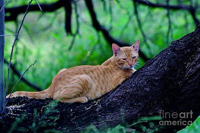 Photograph - Cat In A Tree by Craig Wood