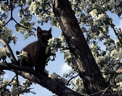 Photograph - Cat In An Apple Tree by George Cousins