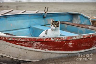 Soul Food Photograph - Cat  by Eleni Mac Synodinos