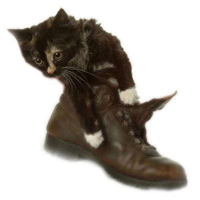 Cat In Boot Art Print