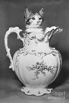 Cat In Pitcher Art Print by Larry Keahey
