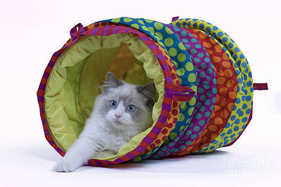 Longhair Cats Photograph - Cat In Play Tunnel by Jean-Michel Labat
