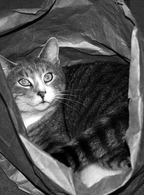 Photograph - Cat In The Bag by Elizabeth Babler